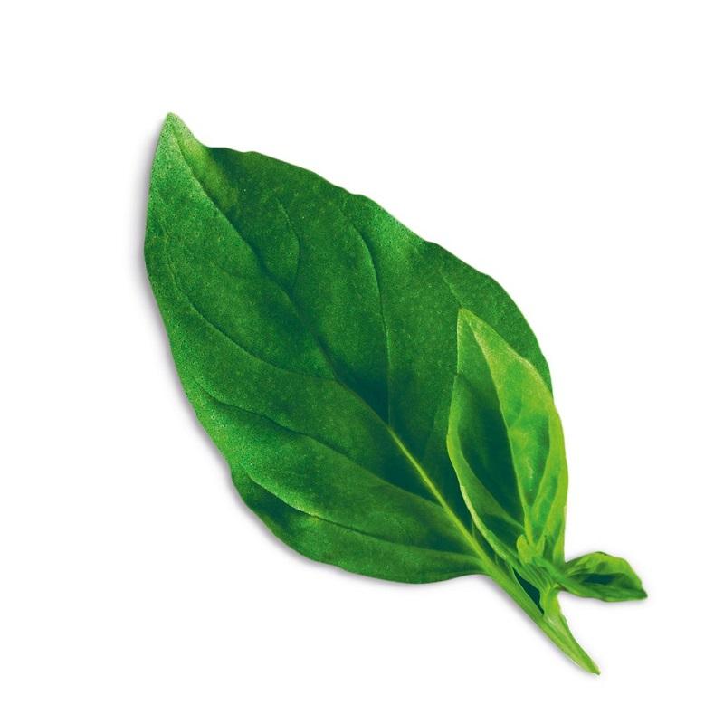 Plantui Smart Garden Plant Capsule – Basil Thai