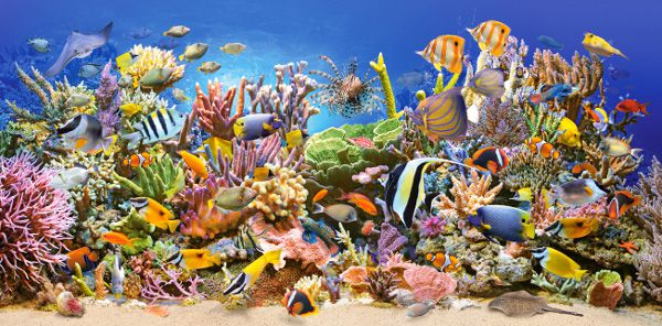Castor 4000 EL. Underwater Life (400089) puzle, puzzle