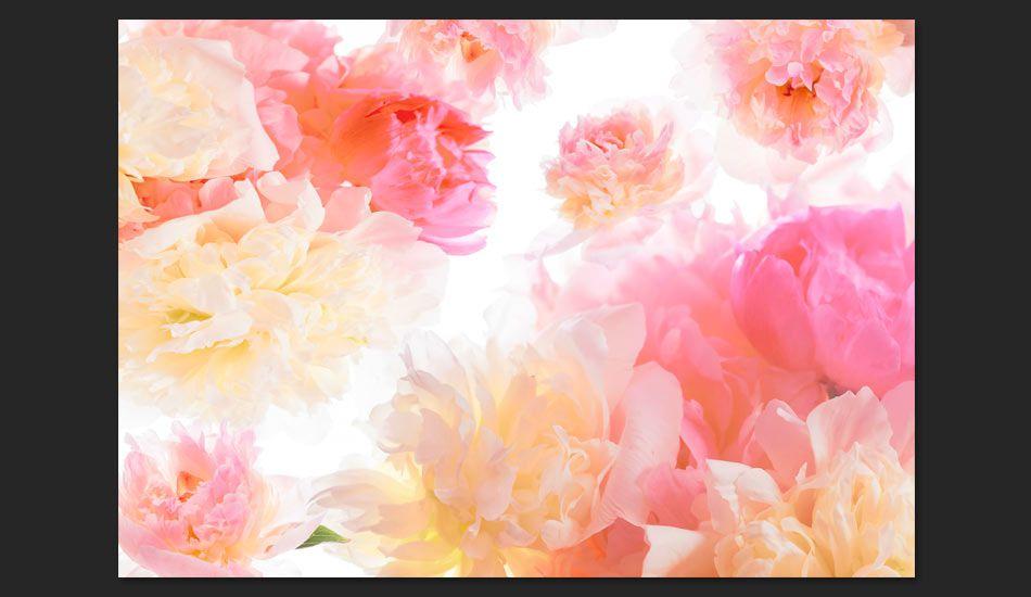 Artgeist Fototapeta - Pastelowe piwonie 350x245 BP-3XLNEW010923