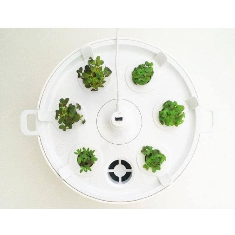 Plantui 6 Smart Garden Grey