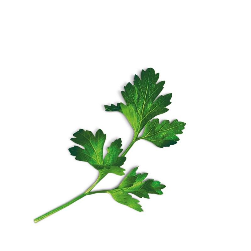 Plantui Smart Garden Plant Capsule – Flatleaf Parsley