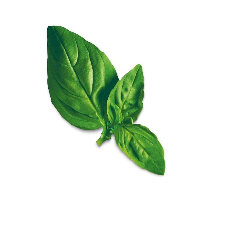 Plantui Smart Garden Plant Capsule – Basil Lemon