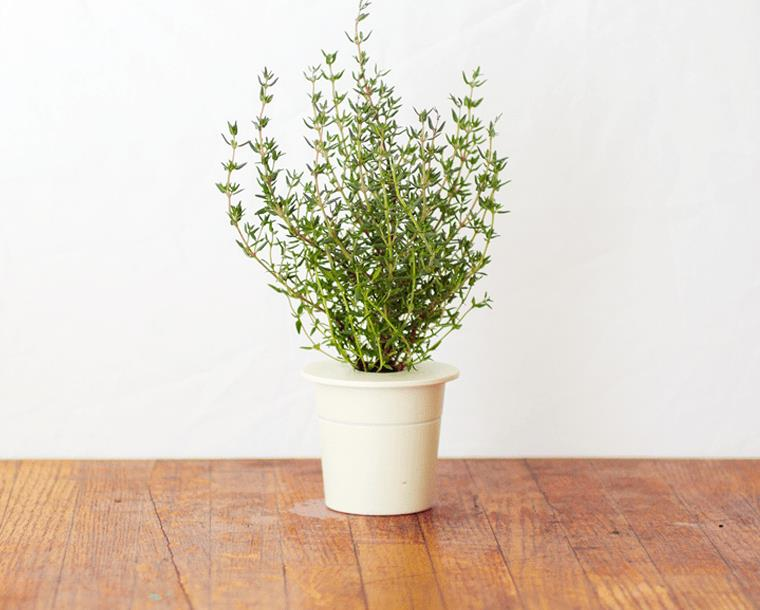 Click & Grow gudrā augu dārza uzpilde Timiāns 3gb.